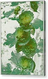 Green Hollyhocks Acrylic Print