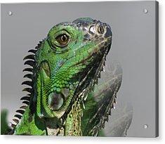Green Iguana Triple Acrylic Print by Vijay Sharon Govender