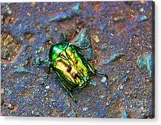 Green Junebug Acrylic Print by Mariola Bitner