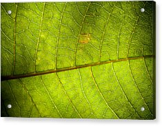Green Leaf Background Acrylic Print by Maratsavalai Lertsirivilai