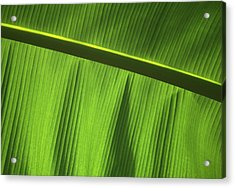 Green Leaf, Close-up Acrylic Print by Axiom Photographic