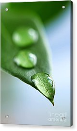 Green Leaf With Water Drops Acrylic Print