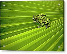 Green Lines Of Nature Acrylic Print by Jeff R Clow
