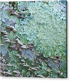 Green Mossy Fungus Party Acrylic Print