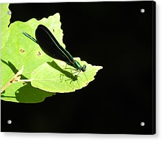 Green On Green Acrylic Print by Don L Williams