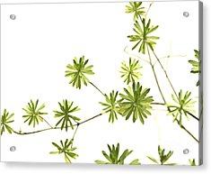 Green Plant Acrylic Print by Blink Images
