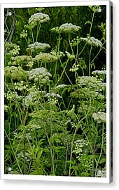 Green Randomness Acrylic Print by Frank Wickham
