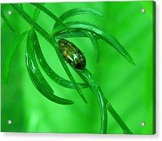 Green Acrylic Print by Rinesh K
