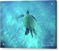 Green Sea Turtle 2 Acrylic Print by Bob Christopher