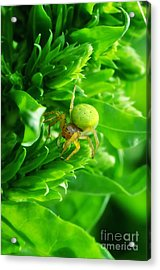Green Spider 2.0 Acrylic Print by Yhun Suarez
