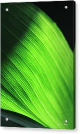 Acrylic Print featuring the photograph Green Wave by Amy Gallagher