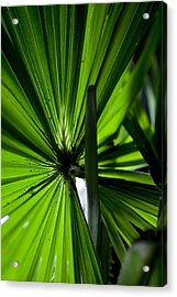 Acrylic Print featuring the photograph Greenery by Carole Hinding
