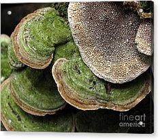 Greening Velvet Brackets Acrylic Print