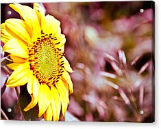 Acrylic Print featuring the photograph Greeting The Sun. by Cheryl Baxter
