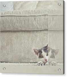Grey And White Cat Peeking Around Corner Acrylic Print