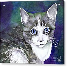 Grey And White Kitten Acrylic Print by Cherilynn Wood