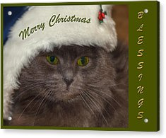 Grey Cat Santa 2 Acrylic Print by Joann Vitali