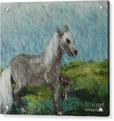 Grey Horse Acrylic Print by Nicole Besack