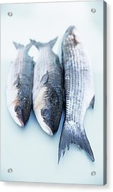 Grey Mullet Acrylic Print by Veronique Leplat