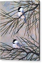Grey Pine Chickadees Acrylic Print