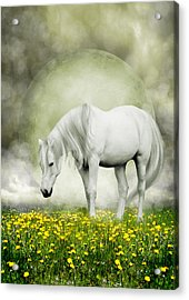 Acrylic Print featuring the photograph Grey Pony In Field Of Buttercups by Ethiriel  Photography