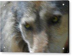 Grey Wolf Painterly Acrylic Print by Ernie Echols