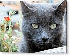 Greycat Acrylic Print by Tammy Herrin
