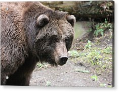 Acrylic Print featuring the photograph Grizzley - 0021 by S and S Photo
