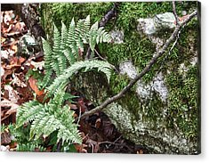 Ground Foliage Near Mountain Lake Acrylic Print