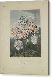 Group Of Carnations Acrylic Print by Robert John Thornton