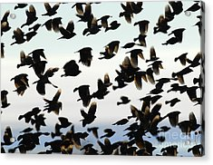 Group Photo Acrylic Print by Dennis Hammer