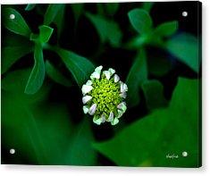 Grow Where You Are Planted Acrylic Print