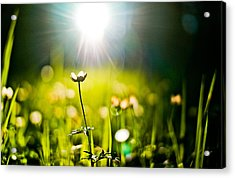Growth Acrylic Print by Justin  Hill