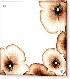 Grunge Poppy Border Acrylic Print by Anna Om