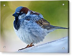 Acrylic Print featuring the photograph Guard Bird by Colleen Coccia