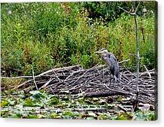 Guarding The Nest Acrylic Print by Larry Hutson Jr