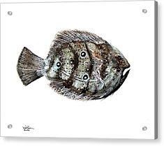 Gulf Flounder Acrylic Print