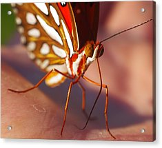 Gulf Fritillary Acrylic Print by Billy  Griffis Jr