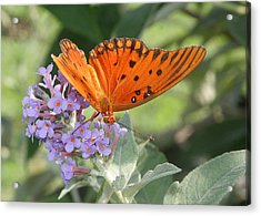 Acrylic Print featuring the photograph Gulf Fritillary On Butterfy Bush by Paula Tohline Calhoun