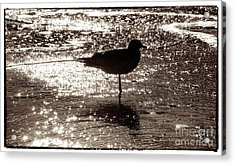 Acrylic Print featuring the photograph Gull In Silver Tidal Pool by Jim Moore
