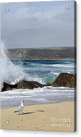 Gull On The Sand Acrylic Print by Linsey Williams
