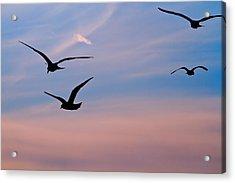 Gulls At Dusk Acrylic Print by Karol Livote