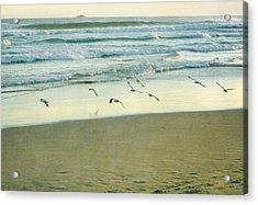 Gulls Flying Acrylic Print by Jill Ferry