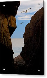 Acrylic Print featuring the photograph Gulls Of Acadia by Brent L Ander