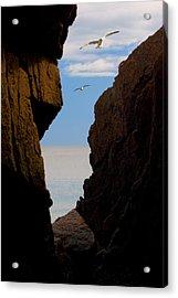 Gulls Of Acadia Acrylic Print