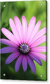 Half And Half  Acrylic Print by Amy Gallagher