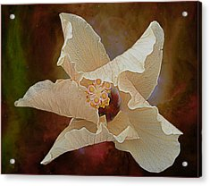 Hibiscus Floats In Space Acrylic Print