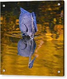 Halloween Heron Acrylic Print by Brian Stevens