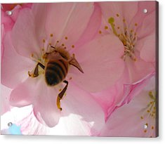 Hangin' With The Honey Bee Acrylic Print by Stacy Lanyon