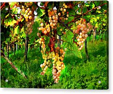 Hanging Grapes On The Vine Acrylic Print by Elaine Plesser